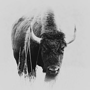 Buffalo Gal Print by Barbara Henry