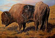 Bison Art - Buffalo grass by Jana Goode
