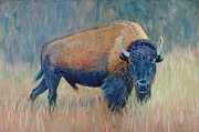 Buffalo Grazing Print by Donald Maier