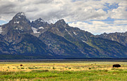 Thunderstorm Framed Prints - Buffalo Herd below Grand Teton Framed Print by Gary Whitton