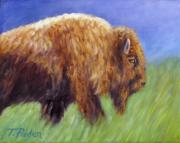 Buffalo Framed Prints - Buffalo in Spring Framed Print by Theresa Paden