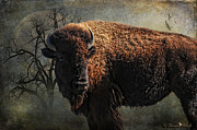 Western Digital Art Posters - Buffalo Moon Poster by Karen Slagle