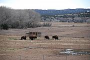 Old Digital Art Originals - Buffalo New Mexico by Rob Hans
