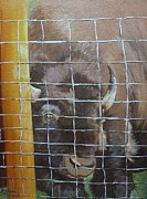 Buffalo Originals - Buffalo or Bison  by Barbara Haviland