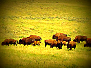 Diana Prickett Metal Prints - Buffalo Ridge Metal Print by Diana Prickett