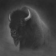 Wildlife Art Drawings Prints - Buffalo Print by Tim Dangaran