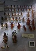 Bugs Photos - Bug Collector - So whats bugging you by Mike Savad