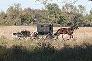 Horse And Buggy Prints - Buggy and Wagon Print by David Arment