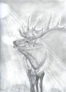 Elk Drawings - Bugling Elk by Don  Gallacher