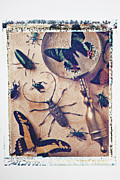 Transfer Prints - Bugs and magnifying glass Print by Garry Gay