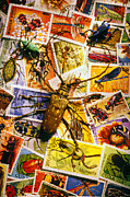 Postage Stamps Prints - Bugs on postage stamps Print by Garry Gay
