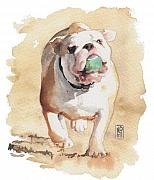 English Bulldog Paintings - Bull and Ball by Debra Jones