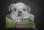 Basket Pastels Prints - Bull Dog In A Basket  Print by Honor Marks