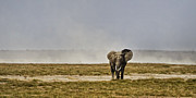 On The Plains Prints - Bull Elephant in Kenya Print by Marion McCristall