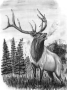 Elk Drawings - Bull Elk Issuing Challenge by Russ  Smith