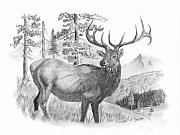 Elk Drawings - Bull Elk by Russ  Smith