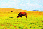 Bulls Metal Prints - Bull Grazing in the Field Metal Print by Wingsdomain Art and Photography