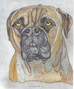 Puppies Drawings Framed Prints - Bull Mastiff Framed Print by Don  Gallacher