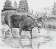 Bull Moose Posters - Bull Moose A walk in the Pond Poster by Russ  Smith