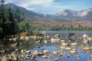 Mount Katahdin Prints - Bull Moose Feeding in Sandy Stream Pond Print by John Burk