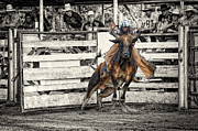 Eight Seconds Posters - Bull Riding - 8 Seconds at a Texas Rodeo Poster by Andre Babiak