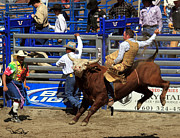 Riding Originals - Bull Riding by David Salter