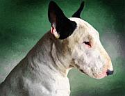 Animal Portrait Posters - Bull Terrier on Green Poster by Michael Tompsett