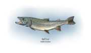 Game Drawings Posters - Bull Trout Poster by Ralph Martens