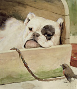 Little House Framed Prints - Bulldog Framed Print by Cecil Charles Windsor Aldin