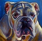 Pet Portraits Framed Prints - Bulldog Expression 2 Framed Print by Kaytee Esser