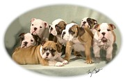 Cute Dog Digital Art - Bulldog Family Pups by Maxine Bochnia