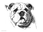 Pen And Ink Portraits Posters - Bulldog-Portrait-Drawing Poster by Gordon Punt
