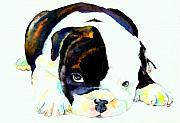 English Bulldog Paintings - Bulldog Puppy by Christy  Freeman