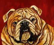 English Bulldog Paintings - Bulldog by Sherry Dole