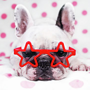 Dog Lying Down Prints - Bulldog With Star Glasses Print by Retales Botijero