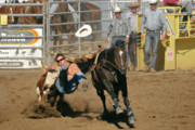 Cowboys Framed Prints - Bulldogging at the Rodeo Framed Print by Christine Till