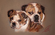 Dogs Pastels Prints - Bulldogs Print by Ylli Haruni