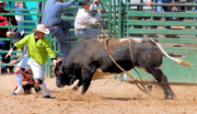 Photo Of Bulls Posters - Bullfighters and Barrelmen Poster by Cheryl Poland
