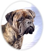 Bullmastiff Prints Metal Prints - Bullmastiff 35 Metal Print by Larry Matthews