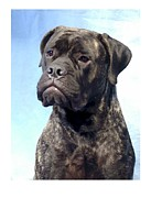 Bullmastiff Prints Metal Prints - Bullmastiff 756 Metal Print by Larry Matthews