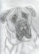 Mastif Prints - Bullmastiff Print by Don  Gallacher