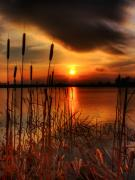 Sunset Pictures Framed Prints - Bullrush Sunset Framed Print by Kim Shatwell-Irishphotographer