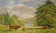 Angus Paintings - Bulls at Balmoral by Tim Scott Bolton