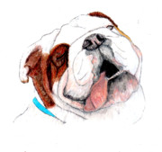 Puppies Drawings Framed Prints - Bully For You Framed Print by Barbara Giordano