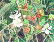 Bumblebee Drawings - Bumblebee and Blackberries by Vera Rodgers