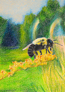 Bee Drawings - Bumblebee by Tina McCurdy