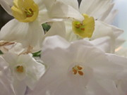 Jonquils Photos - Bunch of Dills by Miss McLean