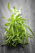 Herbs Photos - Bunch of fresh rosemary by Elena Elisseeva