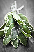 Cutting Board Posters - Bunch of fresh sage Poster by Elena Elisseeva