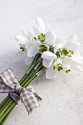 Winter Wedding Flowers Photos - Bunch Of Snowdrops (galanthus Nivalis) With Purple Ribbon by Juliette Wade